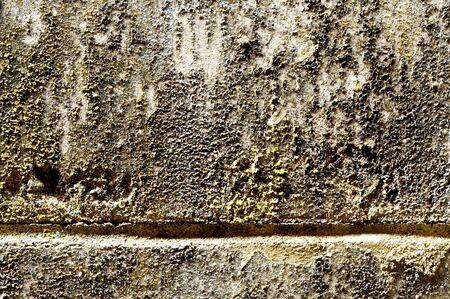 lichen: Old grunge concrete wall cover by Lichen
