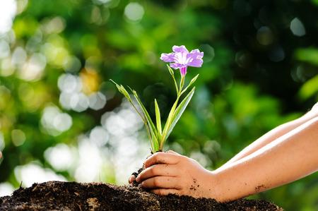 Dítě drží mladých rostlin v rukou na zeleném pozadí pěstovat na půdě. Concept Den Země