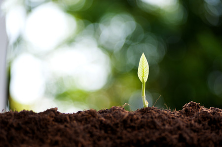 soil: Young green seedling of plant germninate from the black soil Stock Photo