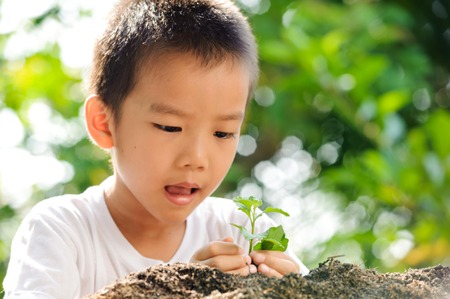 Child holding young plant in hands on green background to plant on soil. Concept Earth day