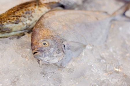 restuarant: Thin focus on dead sea fish eye on ice at the restuarant