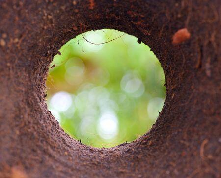 planta con raiz: Enfoque tono oscuro, Disparo de orificio inferior del suelo, fuera de primer plano de enfoque y raíz de la planta sobre fondo verde bokeh Foto de archivo