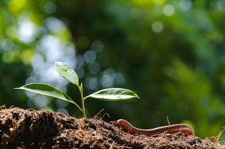 Thin focus on Millipede climb on soil with young seedling plant on green bokeh photo