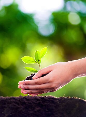 Focust on Young woman hand planting seedling into black soil with green bokeh effect Imagens