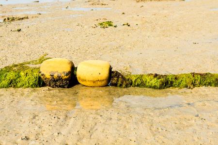 beach buoy: Old buoy cover by green algea on the beach Stock Photo