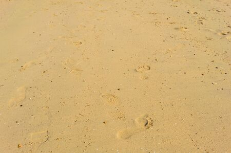 foot step: The foot step on the beach sand in a day time