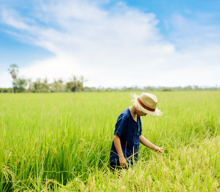panicle: Young asian boy touch and check rice panicle on his paddy field. Food and agricultural concept.