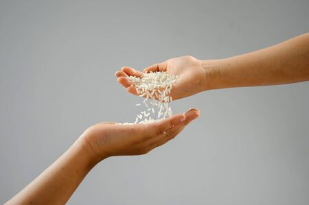 cereals holding hands: Clouse up white jasmie rice is Thailand major variety for consumption  good smell and delicious
