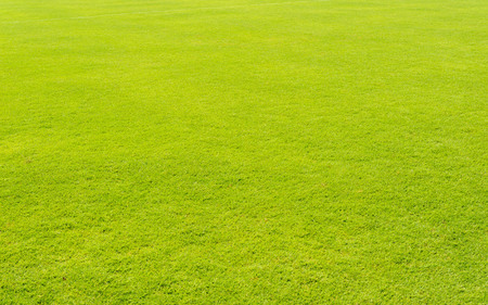 lawn grass: Green lawn grass in football field background