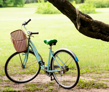 Squirrel interesting in Old and vintage bicycle on green grass under the big tree in the park during summer time