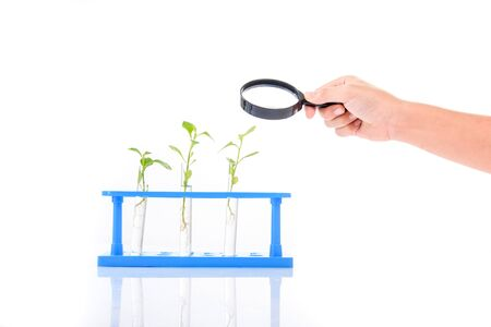 children learning: Magnify glass in child hand over plant seedling in glass tube on white background