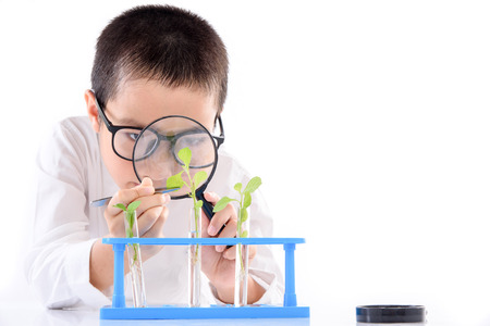 Young Asian boy check young seedling plant in glass tube for his experimental on white background