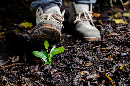 Traveller shoe step on Young plant growing on orgainic soil, old leaf in the forest wet after raining Banco de Imagens