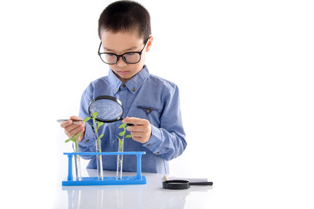 children learning: Young Asian boy check young seedling plant in glass tube for his experimental on white background
