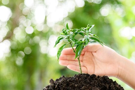 black soil: Little child hand protecting small seedling that growing from black soil. Earthday concept.