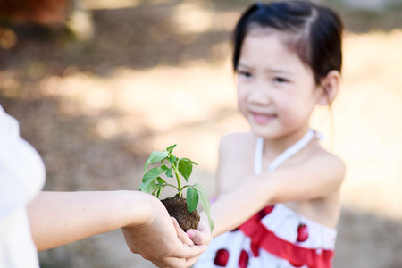 sustainable: Thin focus on hand, Child sharing young seedling plant in hands to the older hand. Concept Earth day Stock Photo