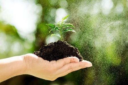black soil: Little seedling in black soil on child hand and fog.
