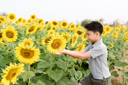 giant sunflower: Selective focus on the giant sunflower in young boy hand. Earth day concept. Stock Photo