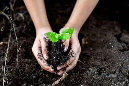 black soil: Selective focus on Little seedling in black soil on child hand. Earth day concept.