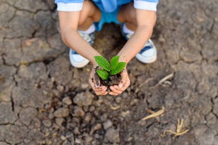 the requirement: Selective focus on hand of young Thai boy carry little seedling on dry and crack empty land. Earth day concept.