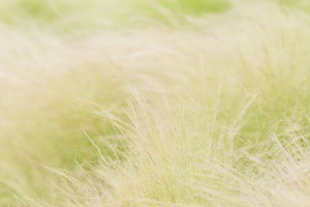 blow dry: Thin focus of the dry weed flower movement effect by the wind blow.