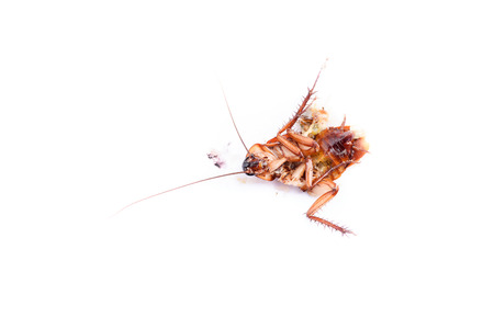 revolting: Dead cockroaches and collapse on the white floor.