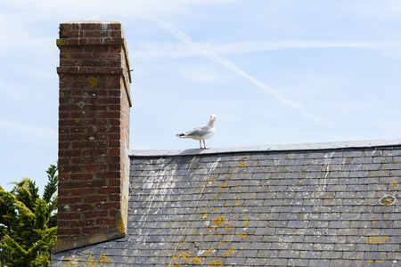 alone bird: One bird stand alone on the old roof in front of the blue sky background. Stock Photo
