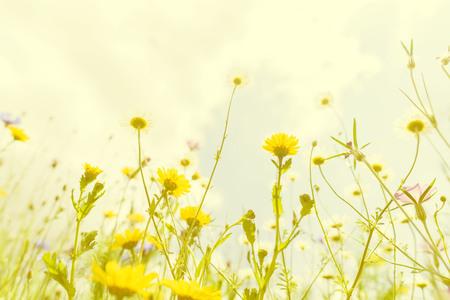 germinación: Amarillo tono de arte de la luz, desde el ángulo inferior, foco selectivo en la flor bajo el cielo azul de la nube blanca Foto de archivo