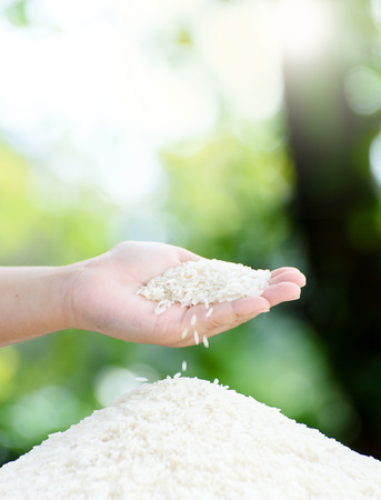 Close up white Jasmine rice variety is Thailand major variety for consumption good smell and delicious in young kid hand. Stock Photo