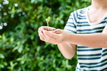 germinación: enfoque selectivo en la pequeña mano que sostiene la planta de semillero chico joven en Soile para el cultivo. concepto de día de la tierra.