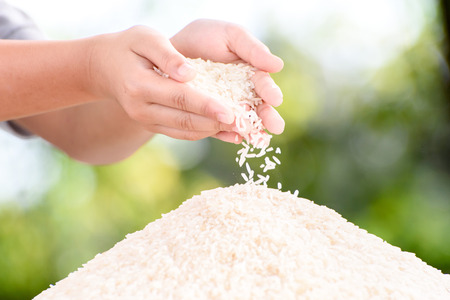 Close up white Jasmine rice variety is Thailand major variety for consumption good smell and delicious in young kid hand. Archivio Fotografico