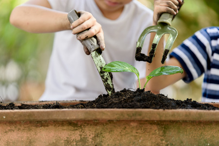 the requirement: Selective focus at hand, Young Thai boy planting little seedling on the black soil in the garden. Earthday concept.