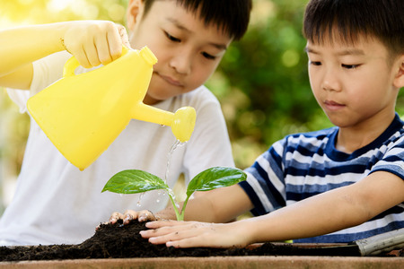 the requirement: Selective focus at hand, Young Thai boy water on little seedling on the black soil in the garden. Earthday concept.