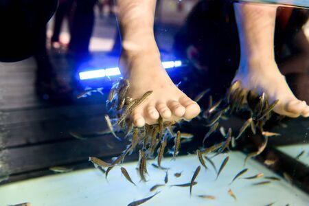 Foot spa by little fish in fresh water by little feet of children
