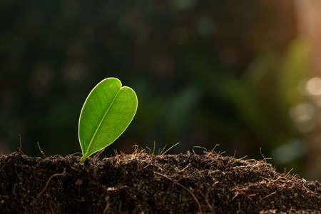 Selective focus on Little seedling plant growing in black soil during summer morning sunlight. Earth day concept. Banque d'images