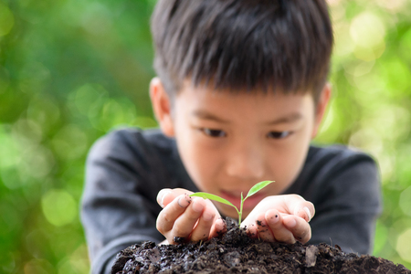 Thin focus on hand, Child holding young seedling plant in hands on green background to plant on soil. Concept Earth day