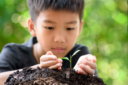 Thin focus on hand, Child holding young seedling plant in hands on green background to plant on soil. Concept Earth day Imagens - 123421459