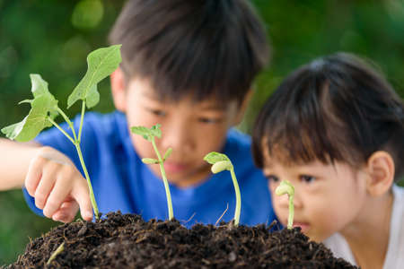 Selective focus at young seedling growing from black soil with backgroud of out focus young Asian boy and girl. Earthday concept.