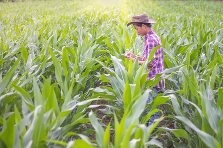 Male farmers are researching and recording the growth of corn on the farm. Agricultural concept. Reklamní fotografie