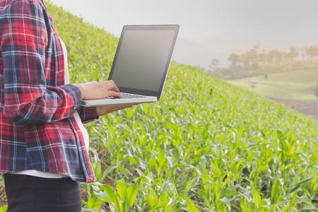 Female farmer recording the growth of corn in corn fields. .