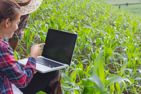 Agronomist examining plant in corn field, Couple farmer and researcher analyzing corn plant. Stock Photo