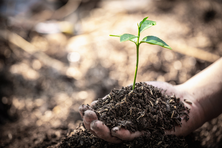 Human hand holding a small seedling, plant a tree, reduce global warming, World Environment Day Banco de Imagens