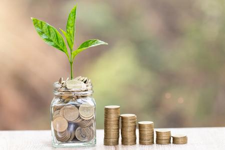 Plante poussant dans un bocal en verre Coins pour économiser de l'argent et investir financièrement, concept d'entreprise, d'innovation, de croissance et d'argent.
