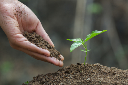 Hands of farmer  nurturing tree growing on fertile soil,  Maintenance of growing seedlings,  Hands protect trees,   plant trees to reduce global warming, Forest conservation, World Environment Day. Standard-Bild - 121176409