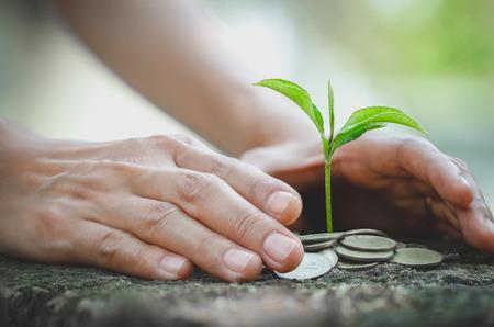 Mano protege la pila de dinero con plantas que crecen en monedas. Ahorro de monedas de dinero, Manos que cuidan de árboles en monedas, concepto de finanzas Foto de archivo
