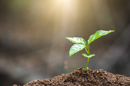 The World Environment Day,  Young plant growing on fertile soil with  drop over green and morning sunlight environment Stock Photo