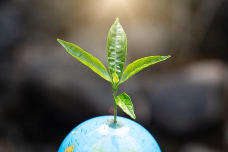 El Día Mundial del Medio Ambiente, árboles verdes jóvenes que crecen en el mundo con caída sobre el medio ambiente verde y la luz del sol de la mañana.