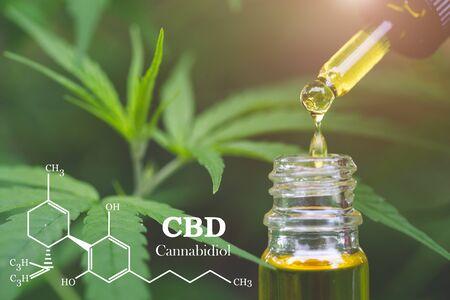Elementos de CBD en Cannabis, aceite de cáñamo, marihuana medicinal, cannabinoides y salud.