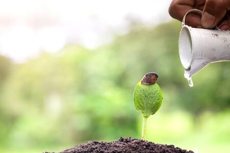 Plant growing on soil with hand watering and green background, plant and save forest concept, World Environment Day