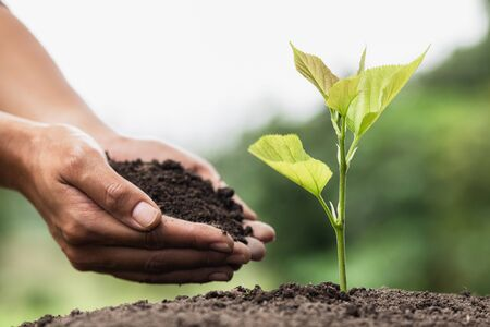 Hands of farmer growing and nurturing tree growing on fertile soil,  environment Earth Day In the hands of trees growing seedlings,  protect nature
